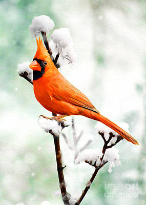Birds In Snow Wall Art - Photograph - Christmas Cardinal by Laura D Young