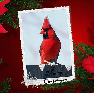 Photograph - Christmas Cardinal by Leticia Latocki