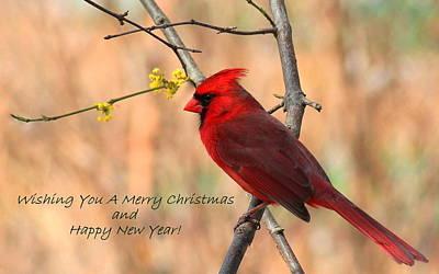 Christmas Photograph - Christmas Cardinal by Rosanne Jordan