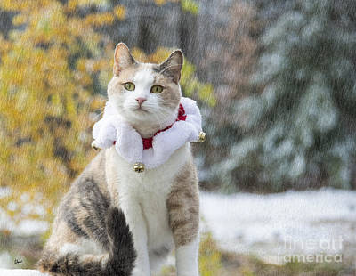 Photograph - Christmas Cat by Alana Ranney