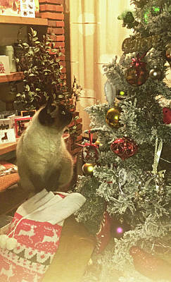 Photograph - Christmas Cat by Anne Kotan
