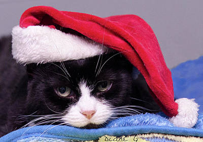 Photograph - Christmas Cat by Diane Giurco