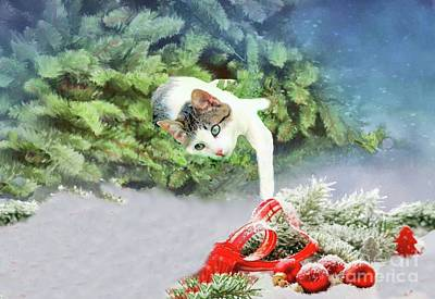 Photograph - Christmas Cat by Janette Boyd
