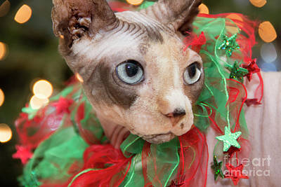 Photograph - Christmas Cat by Jeannette Hunt