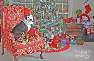 Photograph - Christmas Day by Alana Ranney