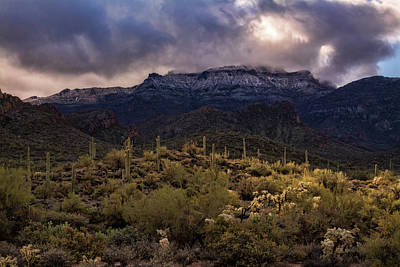Photograph - Christmas Day At The Superstitions  by Saija Lehtonen