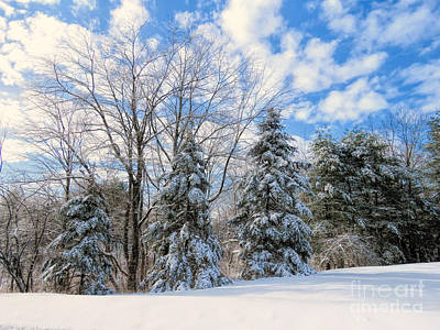 Photograph - Christmas Day Snow by Janice Drew