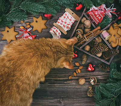 Ginger Cat Photograph - Christmas Decoration With Ginger Cat Hanging Over The Wooden Background by Oksana Ariskina