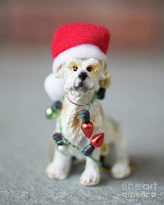 Photograph - Christmas Dog Card by Edward Fielding