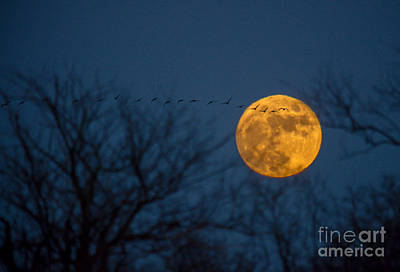 Photograph - Christmas Eve Geese In Moon Rise Flight by Cheryl Baxter