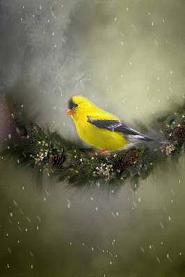 Christmas Finch Original by Mary Timman