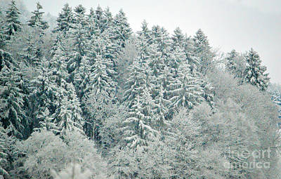 Photograph - Christmas Forest - Winter In Switzerland by Susanne Van Hulst