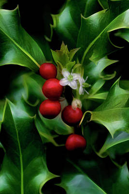 Photograph - Christmas Holly by Wes and Dotty Weber