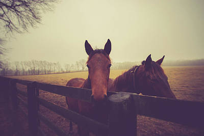Photograph - Christmas Horses by Shane Holsclaw