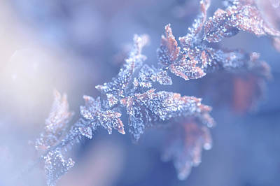 Photograph - Christmas Joy, Frozen Leaf. Natural Wonder by Jenny Rainbow