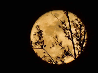 Photograph - Christmas Moon by Pamela Walton