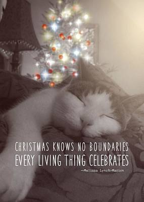 Christmas Nap Quote Art Print by JAMART Photography