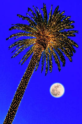 Photograph - Christmas Palm Tree And Moon by Garry Gay