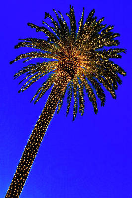 Photograph - Christmas Palm Tree by Garry Gay