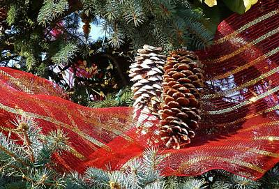 Photograph - Christmas Pine Cones by Jennifer Wheatley Wolf