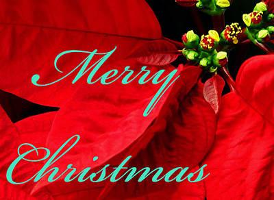 Photograph - Christmas Poinsettia  by Bob Johnson