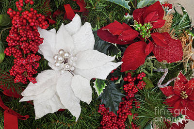 Photograph - Christmas Poinsettias And Berries by Diane Macdonald