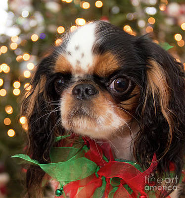 Photograph - Christmas Puppy by Jeannette Hunt