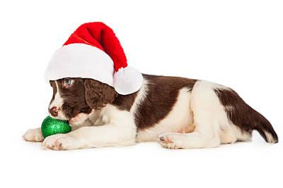 Christmas Puppy Santa Hat And Bulb Print by Susan Schmitz