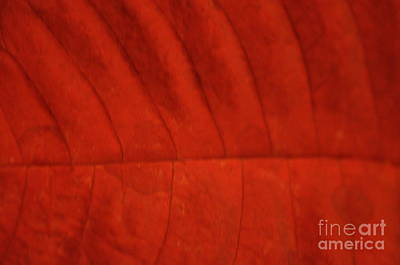 Photograph - Christmas Red by Clayton Bruster