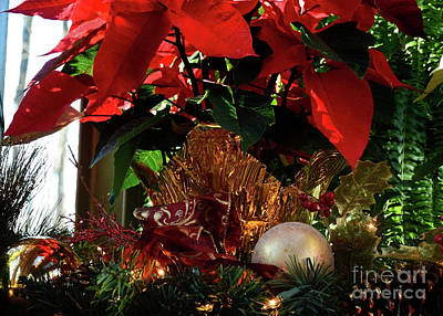 Photograph - Christmas Red by Nava Thompson