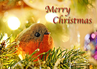 Photograph - Christmas Robin Card by Nancy Greenland