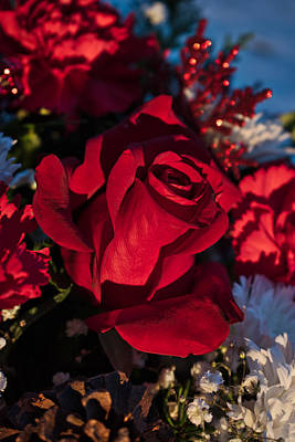 Photograph - Christmas Rose 2 by Cathy Mahnke