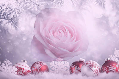 Photograph - Christmas Rose by Johanna Hurmerinta