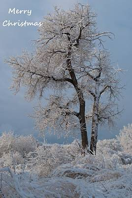 Photograph - Christmas Snow And Frost Covered Tree by Cascade Colors