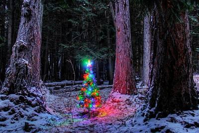 Photograph - Christmas Spirit Among The Giants by Robert Hosea