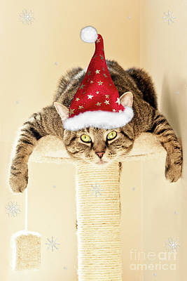 Photograph - Christmas Splat Cat by Terri Waters