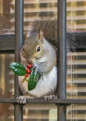 Photograph - Christmas Squirrel by Victor Montgomery