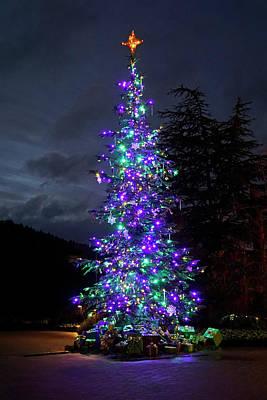 Photograph - Christmas Tree - 365 - 295 by Inge Riis McDonald