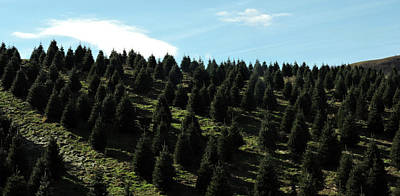 Photograph - Christmas Tree Farm by Grace Dillon