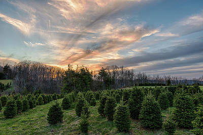 Photograph - Christmas Tree Farm Sunset by Victor Culpepper