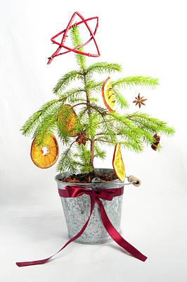 Photograph - Christmas Tree by Helen Northcott