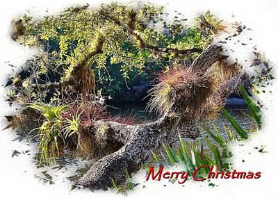 Photograph - Christmas Tree by John Hintz