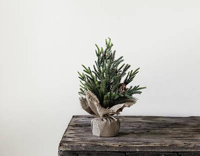 Photograph - Christmas Tree by Kim Hojnacki