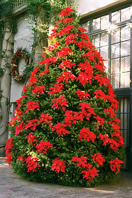 Photograph - Christmas Tree With Poinsettias by Sally Weigand
