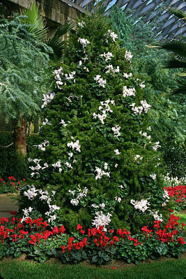 Photograph - Christmas Tree With White by Sally Weigand