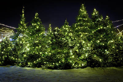 Photograph - Christmas Trees Aglow by Rick Berk