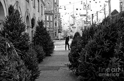 Photograph - Christmas Trees In The Village by John Rizzuto