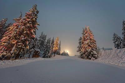Photograph - Christmas Trees  by Sabine Edrissi