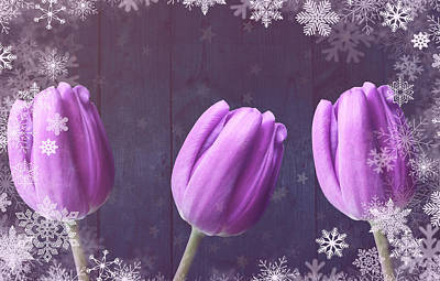 Photograph - Christmas Tulips On Wood by Johanna Hurmerinta