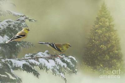 Photograph - Christmas With The Goldfinches by Janette Boyd